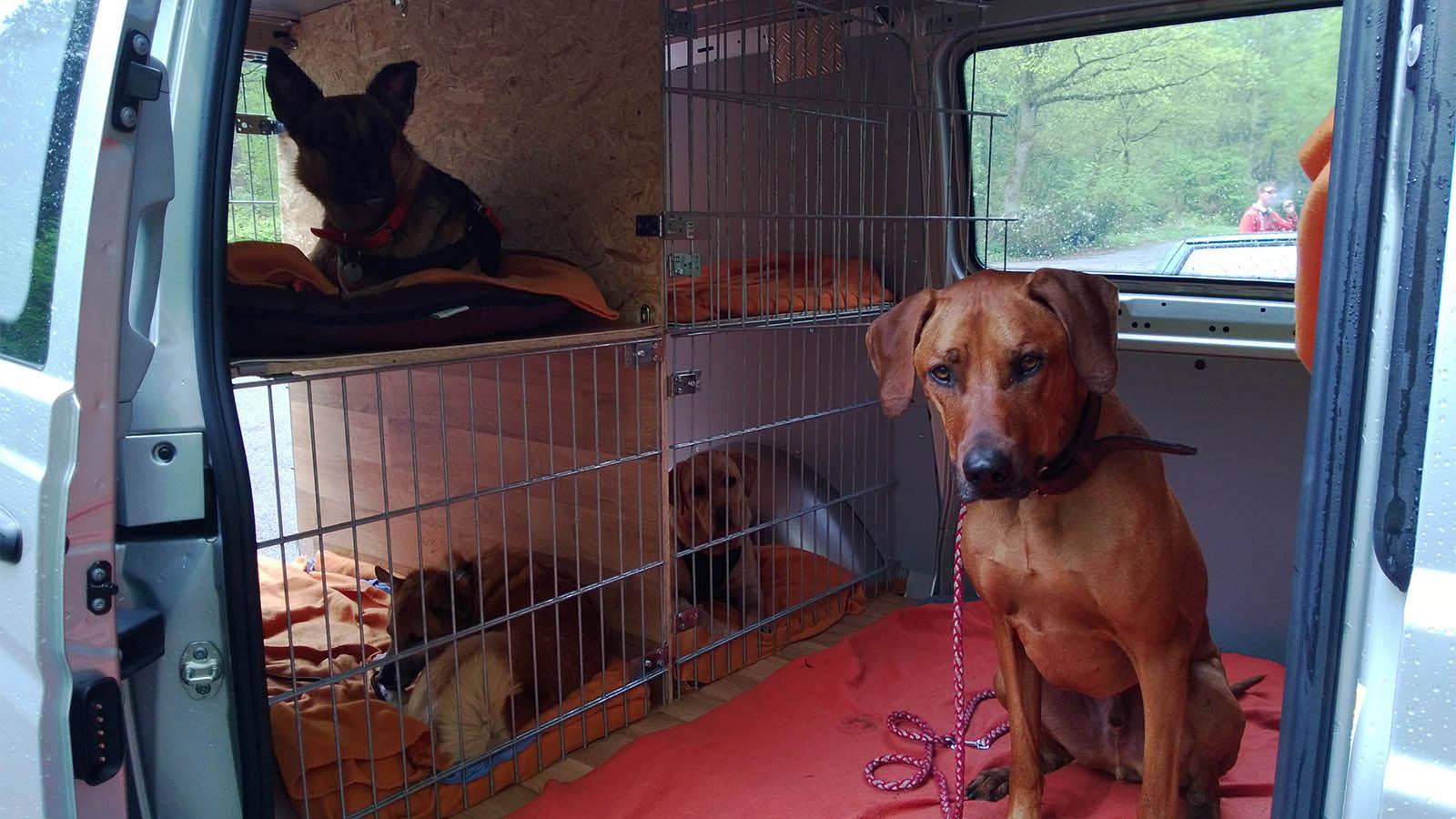 Hundebetreuung Altona: Hier fühlt der Hund sich wohl