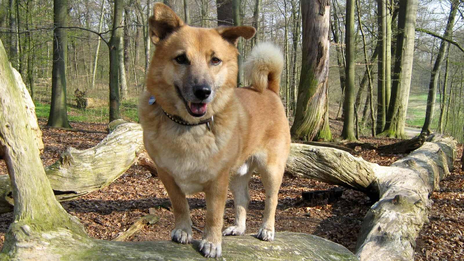 Gassi gehen im Jenischpark an der Elbchaussee - Hundebetreuung Altona