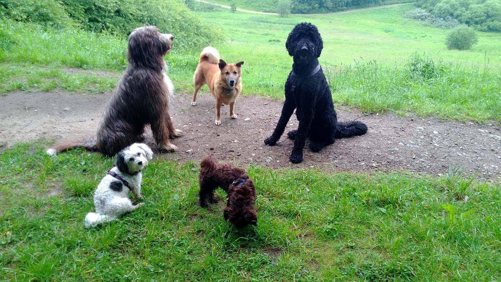 Das Hunde-Rudel ohne Leine - Hundebetreuung Altona