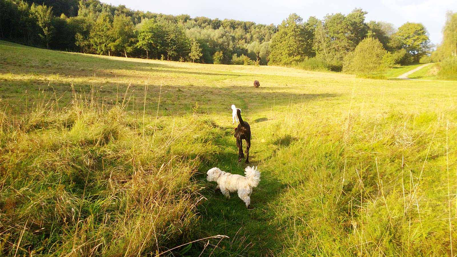 In der Hundemeute in Rissen - Hundebetreuung Altona