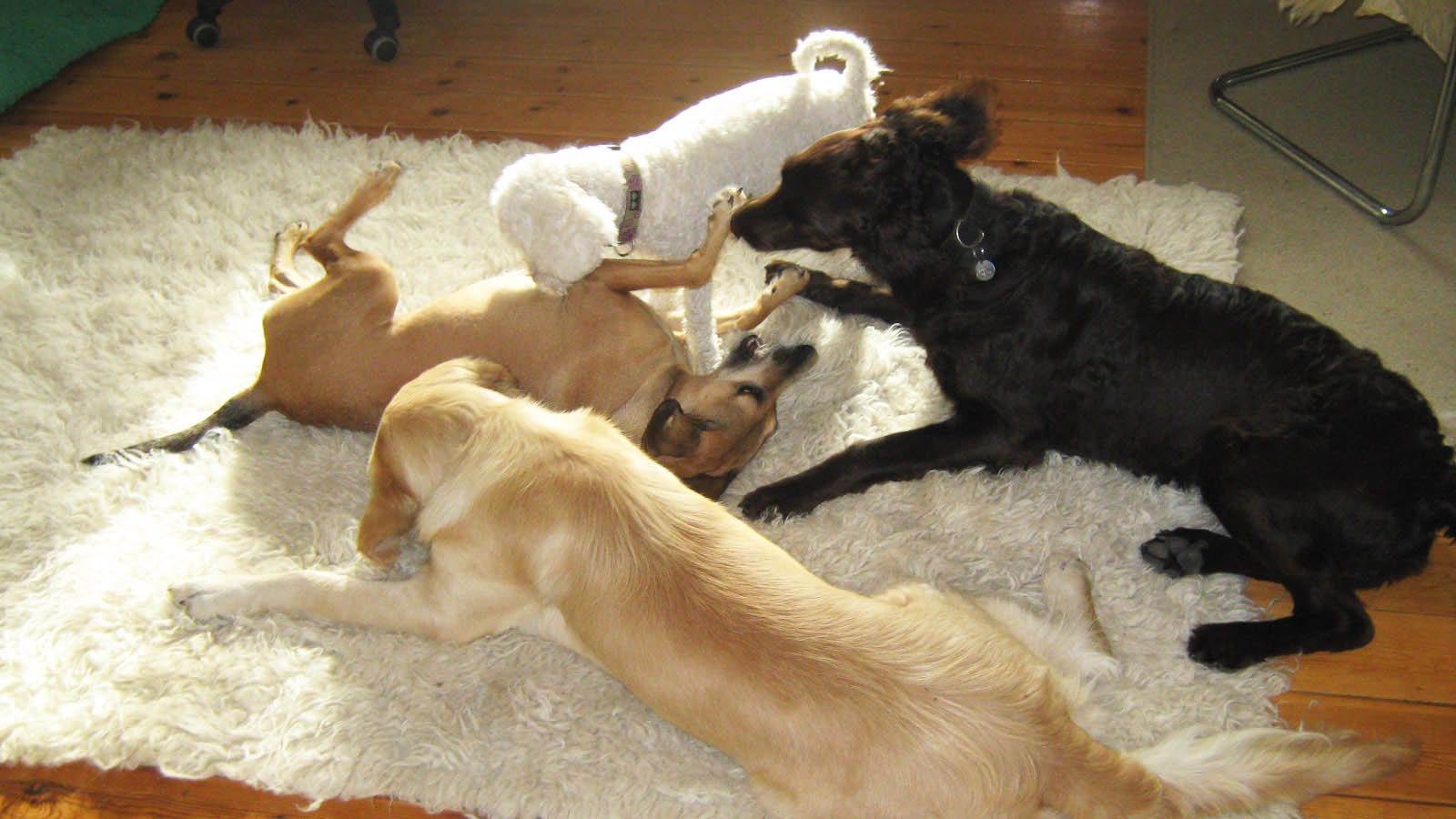 Beschnuppern und Kennenlernen - Hundebetreuung Altona