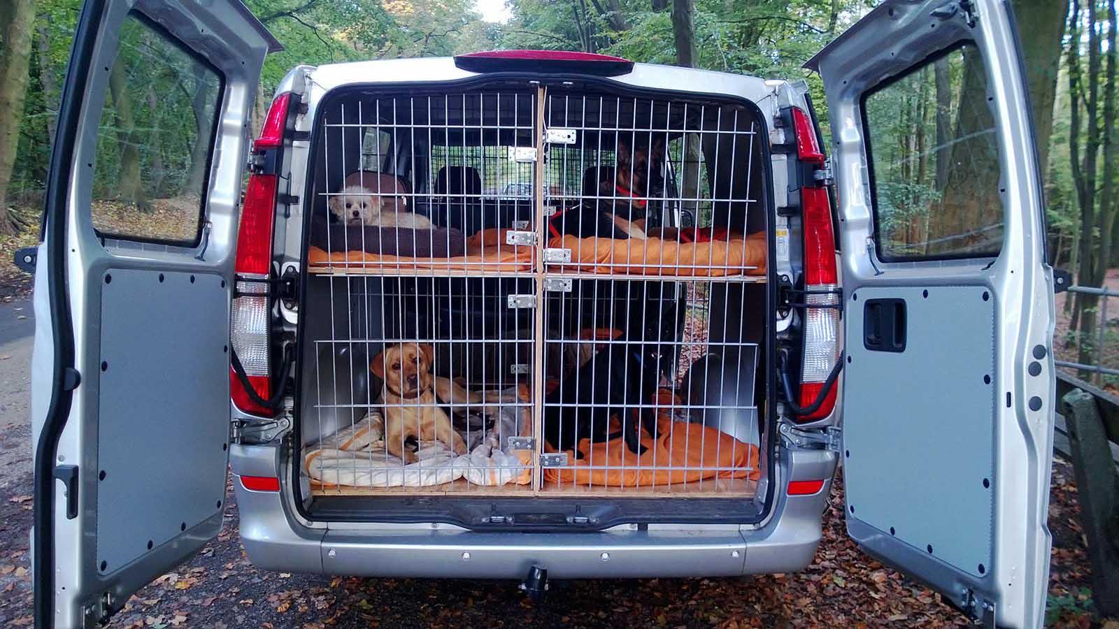 Hundebetreuung Altona: Sichere und gemütliche Hunde-Boxen im Transporter