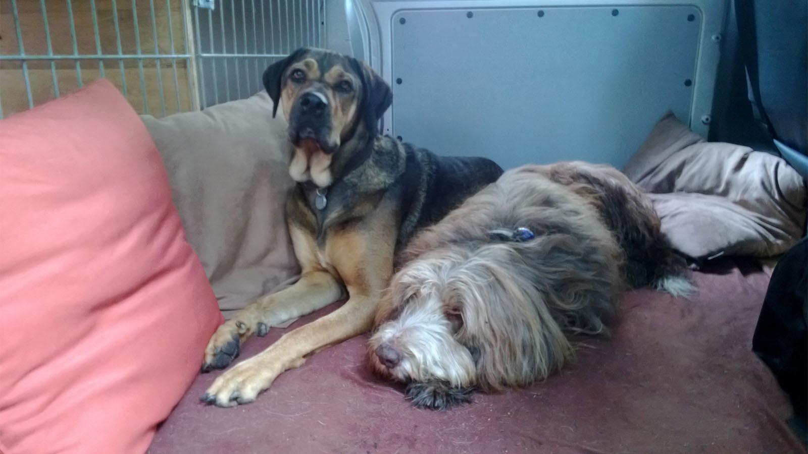 Hundebetreuung Altona: Der Gemeinschaftsraum für unsere Hunde